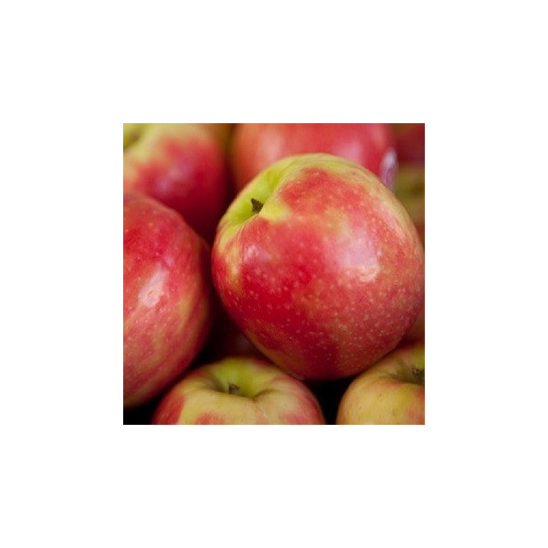 "Confiture Orange, Canelle ""Magdeleine &Joseph"" - 240 g."