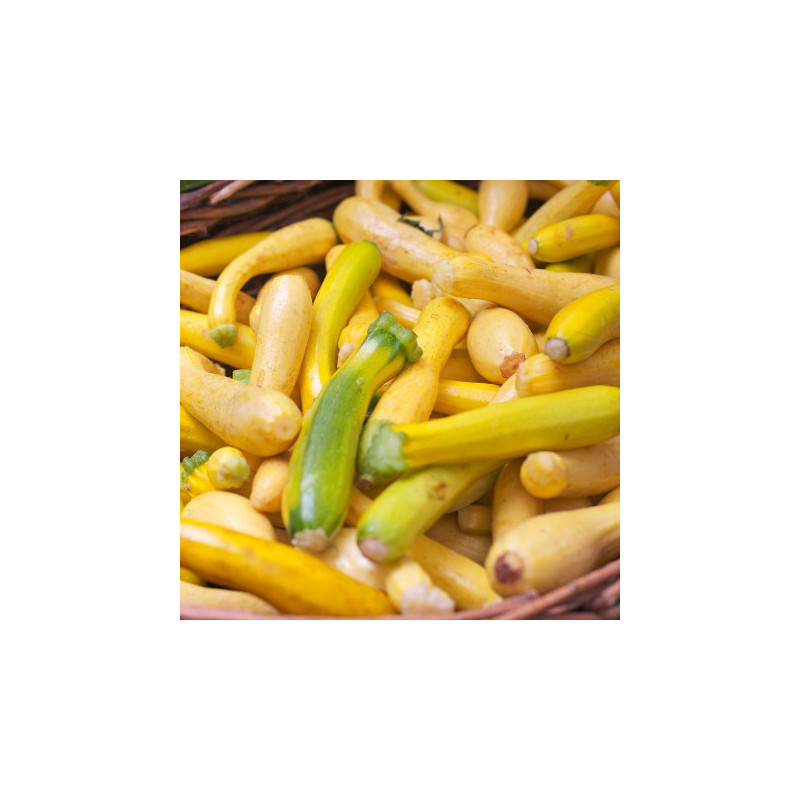 Chocolat Noir Orange bio - tablette - 100 g